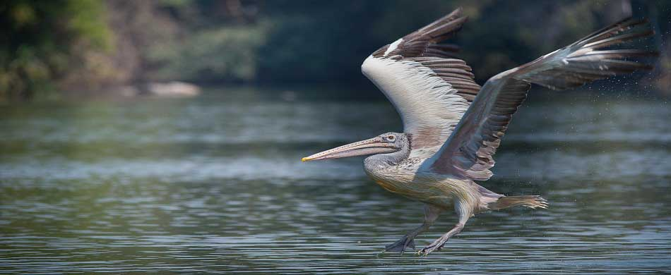 Ranganathittu Birds Sanctuary